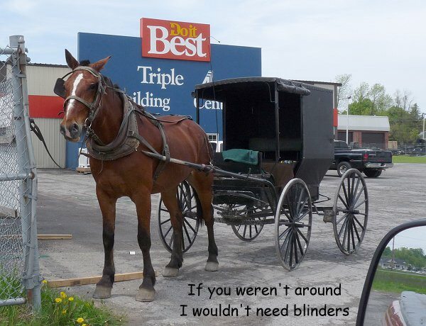 Emotional GC vote confirms horse and buggy as only Adventist transport